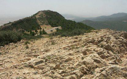 Kasserine : Des terroristes volent les moutons d'un berger