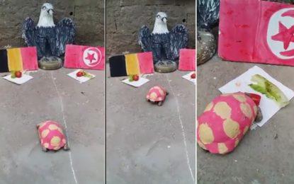 Mondial 2018 : Massoud la tortue prédit la victoire de la Tunisie sur la Belgique