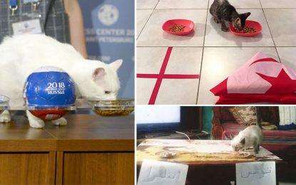 Mondial 2018 : Le chat tunisien Toukabri dément son homologue russe Achille