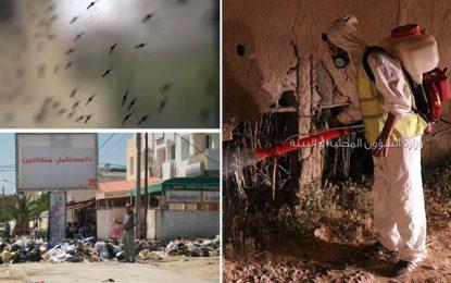 Lutte contre les moustiques : La seule arme efficace c'est la propreté