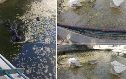 Appel à sauver les phoques du Belvédère qui nagent en eau sale