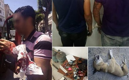 Tunis : Deux braqueurs lâchent leur pitbull sur la police