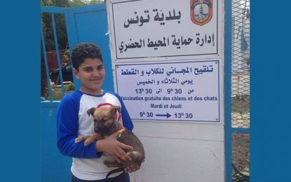 Municipalité de Tunis : Vaccination gratuite des chiens et chats