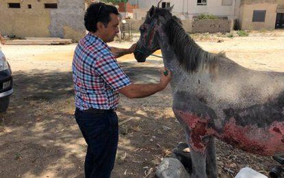 Solidarité : Le cheval de la Goulette a enfin bénéficié de soins