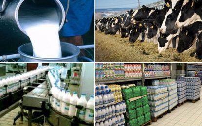 La filière laitière tunisienne sérieusement menacée