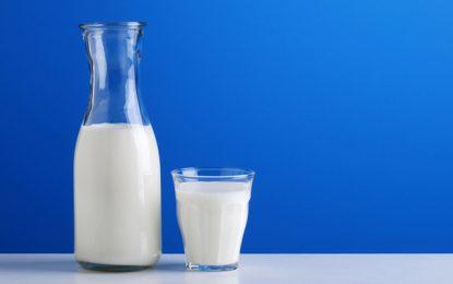 Tunisie : Pourquoi cherche-t-on à démolir la filière du lait?