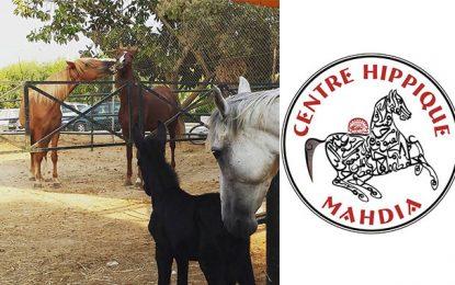 Horse Painting à Mahdia : Des chevaux, des peintres et des enfants