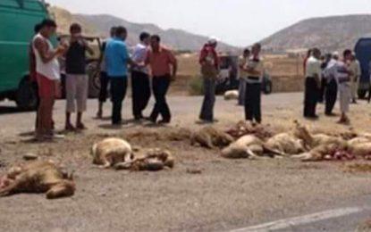 Kasserine : Un berger et ses moutons tués par un chauffard
