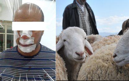Diar Soukra : Quand des vendeurs de moutons se transforment en bandits