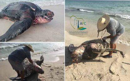 Mahdia : Une autopsie effectuée sur une tortue enflamme la toile