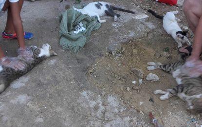 Cité El Ghazala : Un habitant empoisonne des chats du quartier !