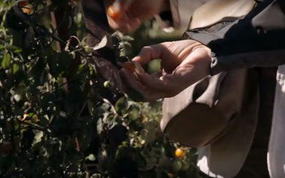 Débat à Tunis : L'agro-écologie au service du développement durable