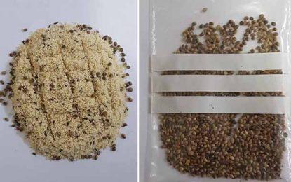 Port de Radès : Saisie de graines de cannabis cachées dans du fourrage