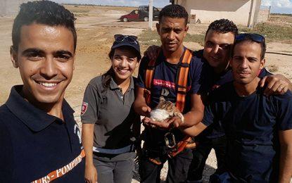Kairouan : Sauvetage d'une chatte tombée au fond d'un puits