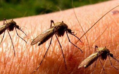 Virus du Nil : Six nouveaux cas suspects à l'hôpital de Kairouan