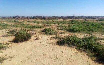 Atelier à Tunis : Pour une gestion durable des terres et des sols au Maghreb