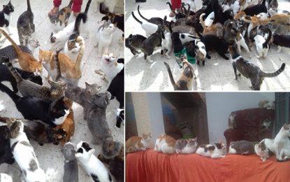 Sidi Hassine : UniVersElle vole à l'aide de Houda, l'amie des chats (Vidéo)
