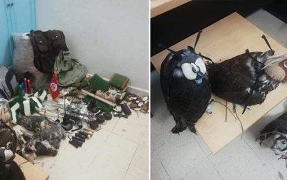 Tataouine : Des «faucons équipés» saisis dans une voiture de contrebandiers