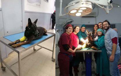 Frits, le chien derrière la réussite de l'opération antiterroriste de Jelma
