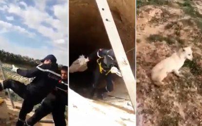 El-Hencha : Sauvetage d'une chienne tombée dans un puits (vidéo)
