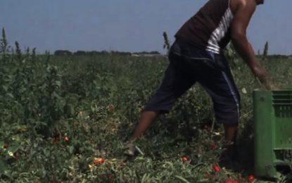 Un Ivoirien meurt dans une ferme à Sidi Bouzid : Suspicion d'exploitation