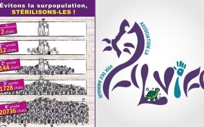 Sousse : Campagne de stérilisation de chats errants à El-Kantaoui