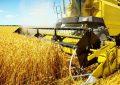 La Tunisie est la championne africaine de l'agriculture biologique