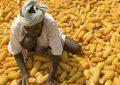 Le futur de l'agriculture, l'Afrique s'y est-elle préparée ?