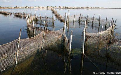La pêche en Tunisie: Une gouvernance borgne au profit  de la pêche illégale