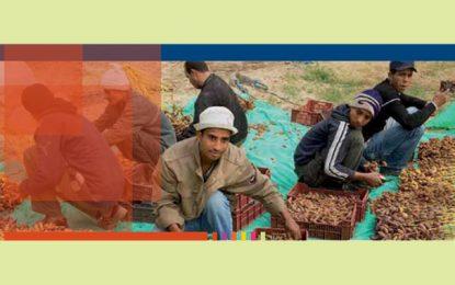 Tunisie : Quel avenir pour les coopératives agricoles?