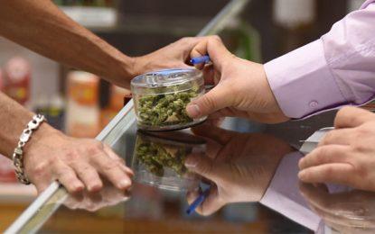 Pour l'octroi d'autorisations de vente de cannabis aux diplômés-chômeurs