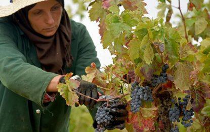 Newsweek: La Tunisie parmi les 5 destinations des meilleurs vins au monde