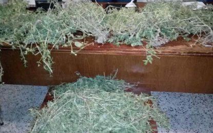 Jendouba: De la cocaïne et 40 plantes de marijuana saisies chez un dealer récidiviste