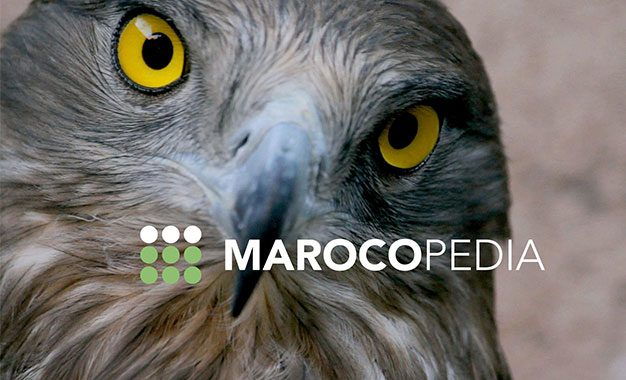 Marocopedia, la première Web TV culturelle du maghreb dédiée à la sauvegarde du patrimoine culturel