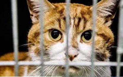 Sidi Hassine: Des chats égorgés et 3 tonnes de viandes pourries chez un takfiriste