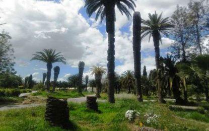 4C-Tunisie : La coalition citoyenne contre le charançon rouge passe à l'action