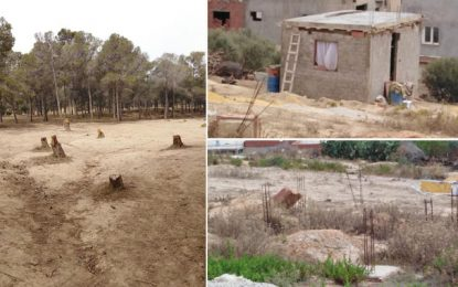 Ariana : Des arbres abattus pour dégager le terrain à des constructions illégales dans une forêt à Raoued  !