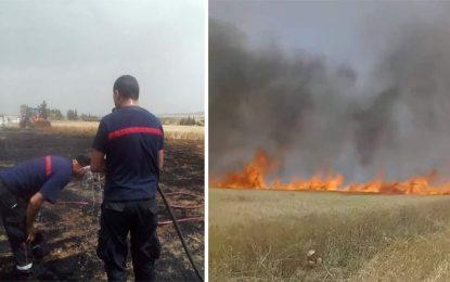 Incendie dans un champ de blé à Siliana, le 11e dans la région en 9 jours !