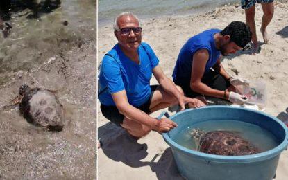 Monastir :  «Libertad», une tortue marine, sauvée il y a deux ans, regagne son milieu naturel (vidéo)