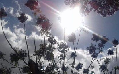Alerte météo : Nouvelle hausse des températures dans toute la Tunisie