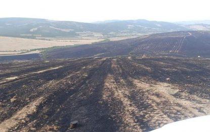 Incendie à Bizerte : Près de 90 Ha de résidus de moisson  et 10 Ha de forêt ravagés par le feu