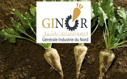 Agro-industrie : Les betteraviers de Jendouba inquiets de la modicité des prix de leur production