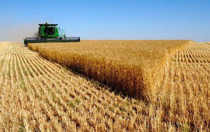 Tunisie : La récolte céréalière a nettement augmenté en 2018-2019