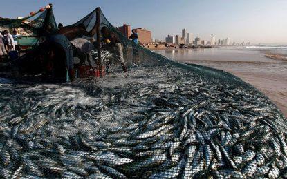 Les membres de l'OMC se préparent à intensifier les négociations sur les subventions à la pêche, en septembre 2019