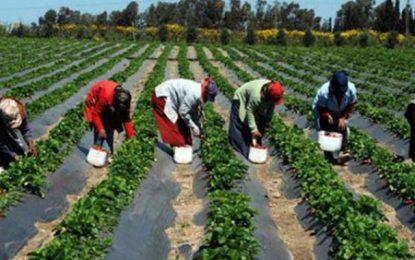 8.000 femmes rurales ont adhéré au programme Ahmini de protection sociale