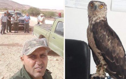 Kairouan : Un rapace protégé, sauvé des mains de braconniers à Oueslatia