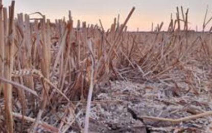 Tozeur : 390.000 DT d'indemnisation à 186 agriculteurs, suite aux dégâts subis au cours des 3 dernières saisons agricoles