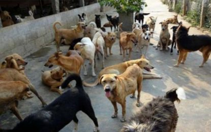 Jendouba, envahie par les chiens errants, attend une réaction des autorités