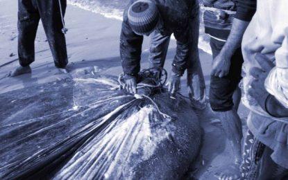 L'Utap dénonce l'immobilisme des autorités tunisiennes face au danger de la pêche illégale