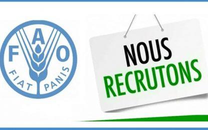 Le bureau de la FAO à Tunis recrute